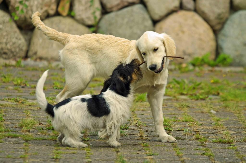 Hundefreundliche ferienwohnung auf fehmarn for Urlaub auf juist mit hund